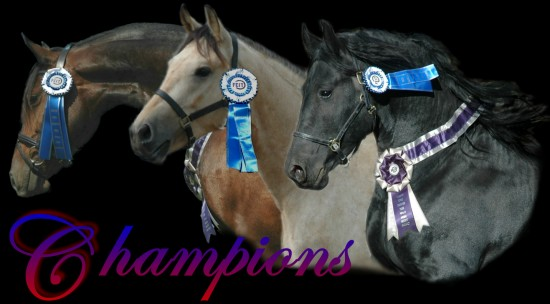 National Champion High Merit Horses-Celebrity, Martini & Armani