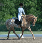 Av'a Minted Design-High Merit mare-Owned by Design Sport Horse