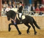 Friesian Stallion-Steffen S.