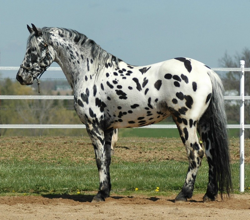 Dot Inspection Near Me >> Specialty_Imperial Heritage Horse