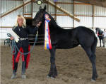 Zafira-Friesian Filly-Inspection Champion-Susie of Black Horse Equestrian